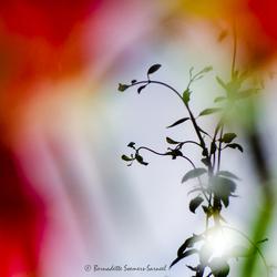Schilderen met bloemen