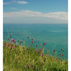 White Cliffs of Dover 02