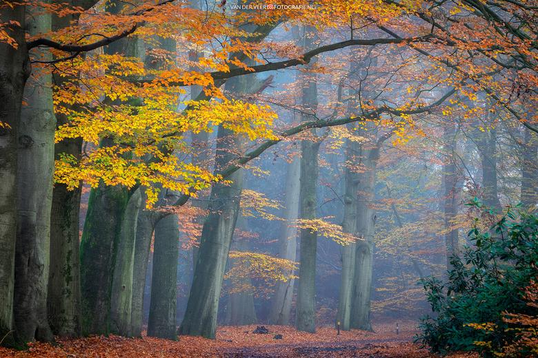 """Autumn Colors - Autumn Colors<br /> <br /> Groeten Frederik<br /> Volg <a href=""""http://www.vanderveerfotografie.nl"""">www.vanderveerfotografie.nl</a>"""