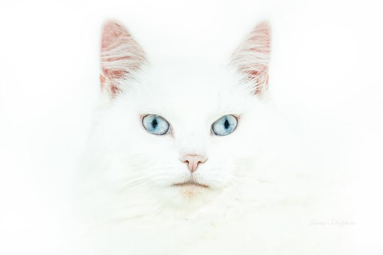 Blue eyes... -
