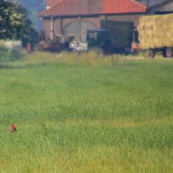 Het boerenland