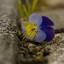 de bloemtjes en de miertjes