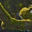 Mossculptuur