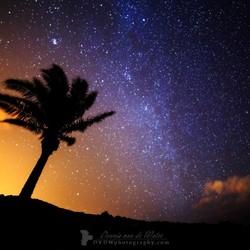 Madeira stars