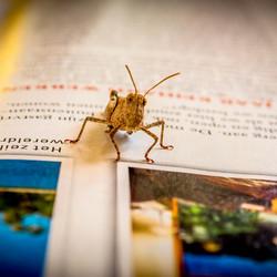 krekel leest ook graag..