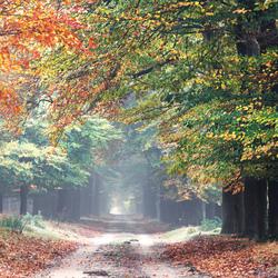 Autumn VII