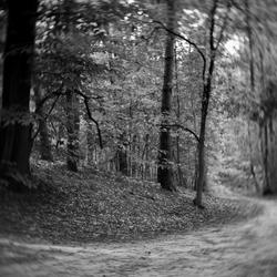 Het bospad met een Toy lens