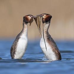 Start pinguïndansen Futen 3