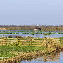 Vogelhut in de Alde Feanen