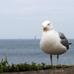 Vogel van de zee