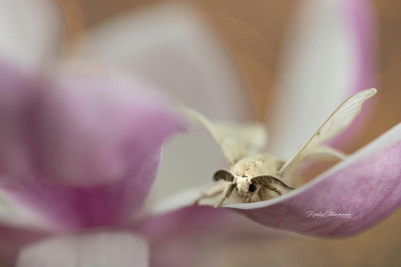 """Heaven must be missing an angel - Voorzichtig kijkt zij even over het randje van de bloem, zal ik of zal ik niet <img  src=""""/images/smileys/wilt.png""""/"""