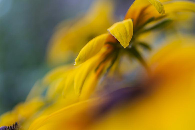 colours of nature - Gisteren ben ik naar een heel mooie tuin geweest met o.a. volop bloemen maar ook andere leuke dingen om me een dag lekker te verma