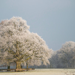 Wintergloed