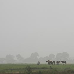 Mistige morgen in Drenthe