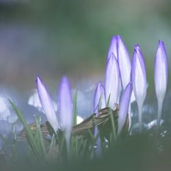 nog een beetje lente
