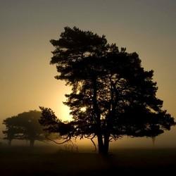 Opkomende zon bij Dwingeloo