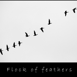 Flock of feathers