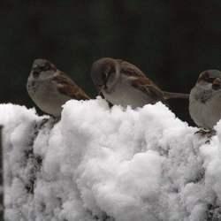 musjes in de sneeuw