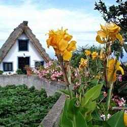 Symbool van Madeira
