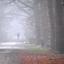 DSC_6630  Dikke mist.