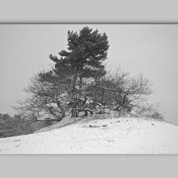 Duinen in de sneeuw