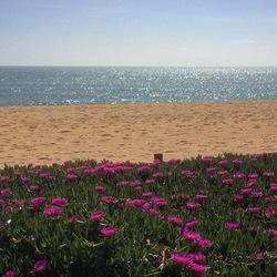 Zee, zand en bloemen