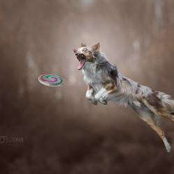 Catch!!
