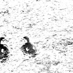 Duck Light!