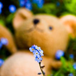 Vergeet me beer niet