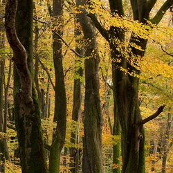 bos van de dansende bomen