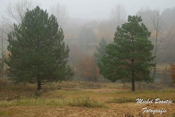 Mist - Mist in de waterleidingduinen bij Vogelenzang