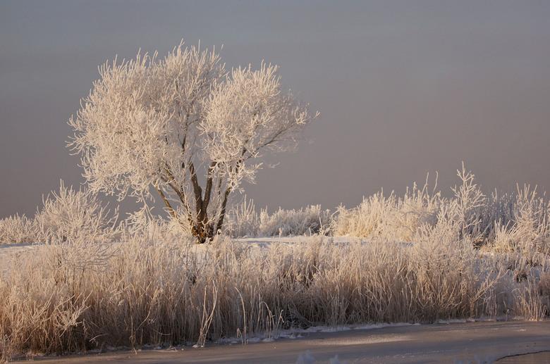winterochtend - op een vroege morgenwandeling zag ik dit beeld