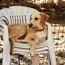 At the dog shelter