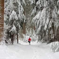Roodkapje in winterwonderland