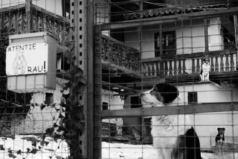 Hondenhuis... - Sinaia - Genoeg honden om hun baasje te beschermen... Sinaia, Roemenië.