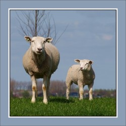 schaap & co