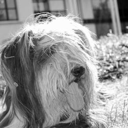 Close up hond