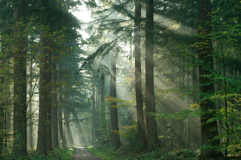sprookjesbos - Geheimzinnige sfeer in het Speulderbos