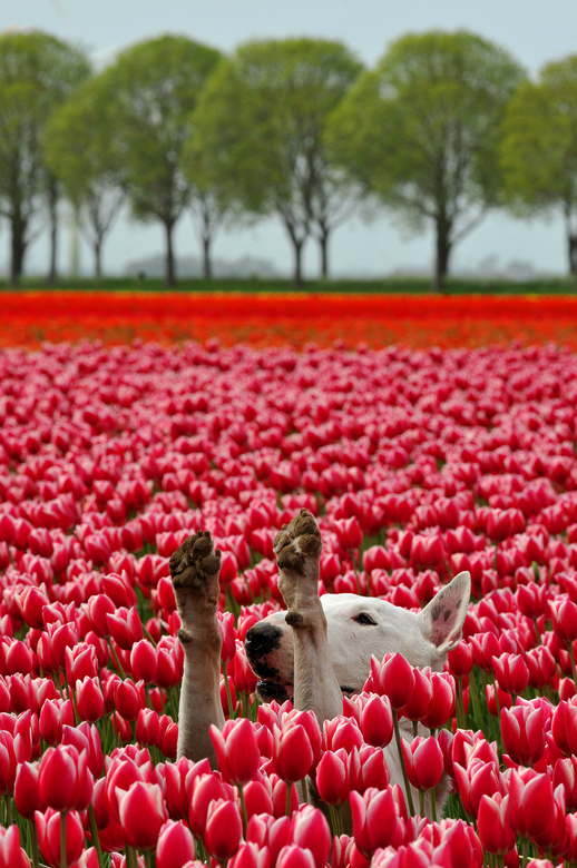 Hup Holland Hup -