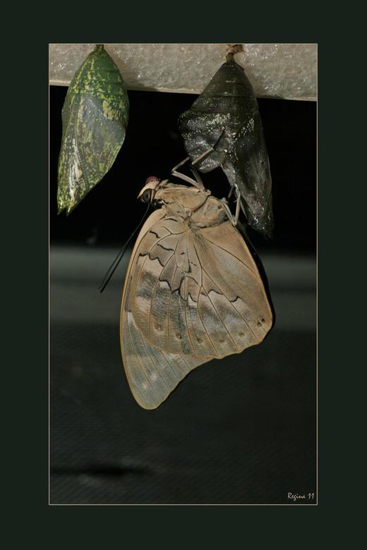 Luttelgeest - Door het glas gefotografeerd in de vlindertuin van Luttelgeest (orchiedeenhoeve)<br /> <br /> gr Regina