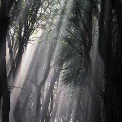 Rays of light 3
