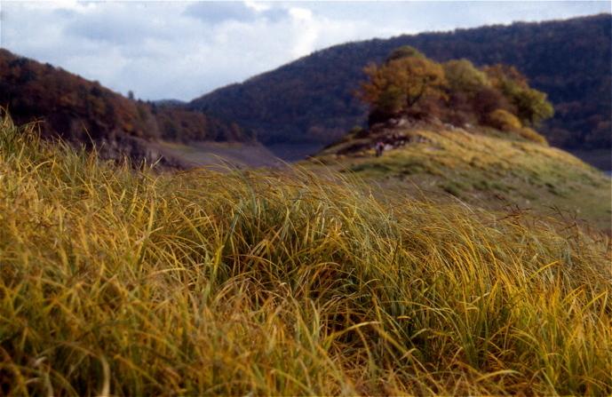 Autumn calls - Bij hoog water een eiland, nu, in het laagseizoen en bij laag water een heuvel in een graslandschap. (gescande dia, Fujichrome sensia 1