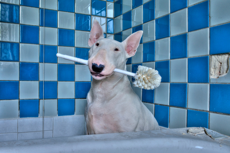 Did you Flush? -
