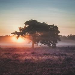 Thin blanket of fog