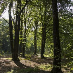 zon door de bomen