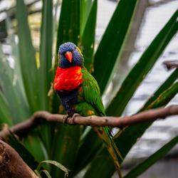 Papegaai in de orchideeënhoeve