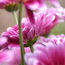 In de bloei