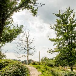 Kampina natuurgebied in Brabant