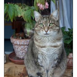Kat achter raam