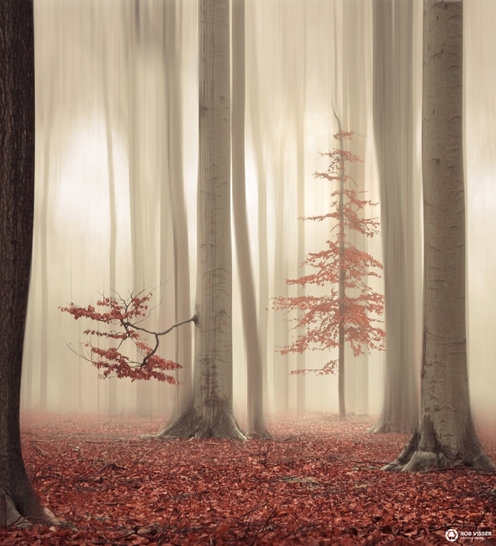 """The humble one - Deze foto is onderdeel van een collectie genaamd """"One tree life"""" die ik heb gemaakt met 4 verschillende foto's van het"""